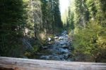 Bull trout lawsuit targets Payette National Forest roads